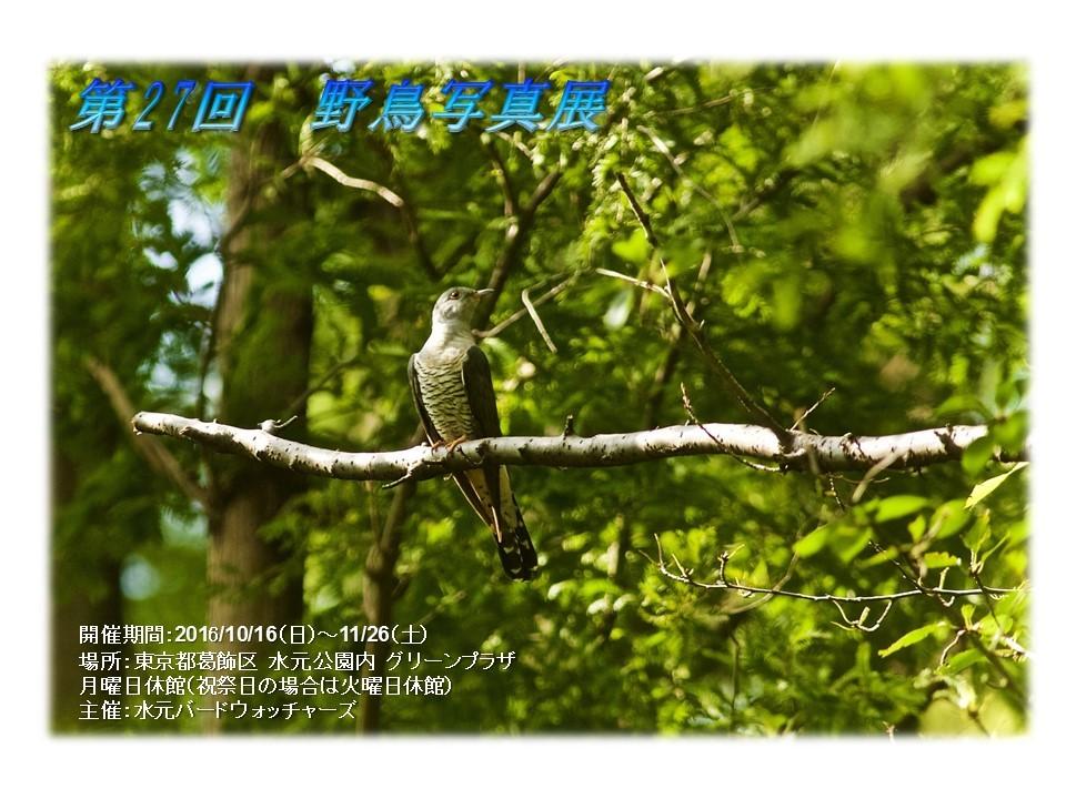 第27回 野鳥写真展.jpg